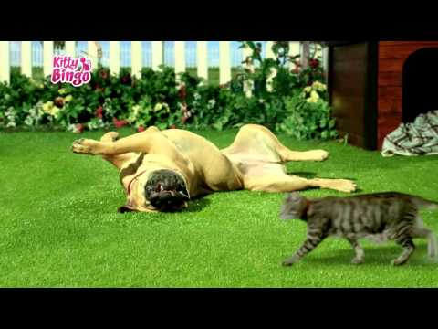 The New Kitty Bingo Ad: It's a Cat's World!