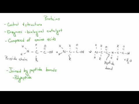 Introduction to Biology - 6 - Carbohydrates, Lipids, Proteins, & More!