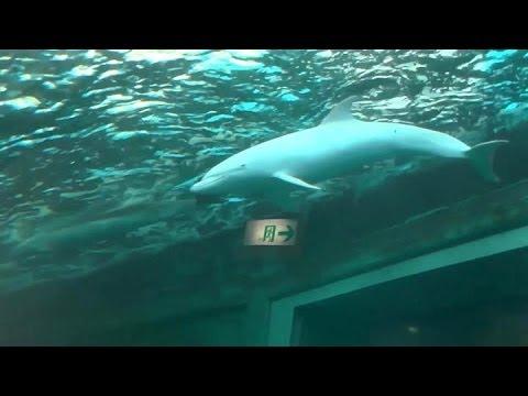 Taiji, Japan - Albino Bottlenose Dolphin at Taiji whale museum