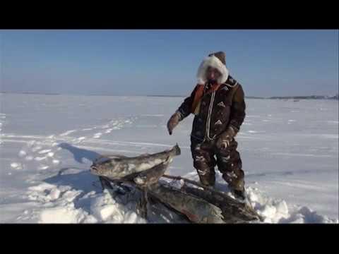 диалоги о рыбалке тикси