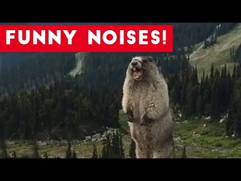 Cutest Funny Animal Sounds Compilation of 2017   Funny Pet Videos