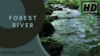 Nature Sounds of a Forest for RelaxingNatural Soothing Sound of a Waterfall  Bird Sounds