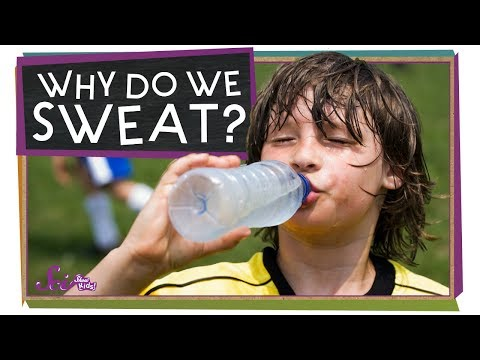 Why Do We Sweat?