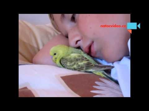 I andulka ráda spí v peřinách :-)