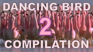 Video Dancing Birds Compilation (Part 2) MP3, 3GP, MP4, WEBM, AVI, FLV Oktober 2018