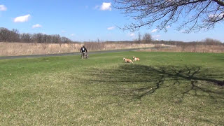 Training a Dog to Stay in its Owners Vicinity Chicago Dog Training
