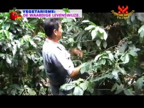 11 03AW1876農場から食卓まで:有機コーヒー豆栽培コロンビアスペイン語