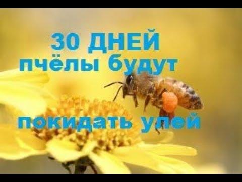 30 дней пчёлы будут покидать улей. Куда деваются пчёлы слабых семей. - DomaVideo.Ru