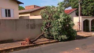 Chuva forte atinge Tupã e causa estragos por toda cidade
