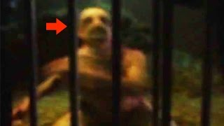 Video 20 CREEPY Unknown Creatures Caught on Tape MP3, 3GP, MP4, WEBM, AVI, FLV Juli 2019