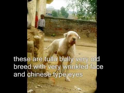 dog fights pakistan