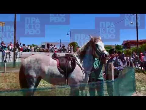 Τα άλογα του Αγίου Γεωργίου στα Λευκάκια Ναυπλίου
