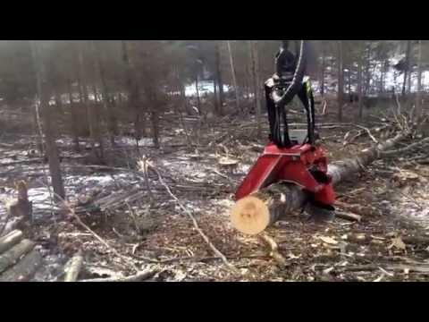 Waratah 622 (видео)