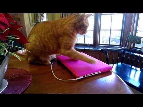 霸王貓佔領筆電