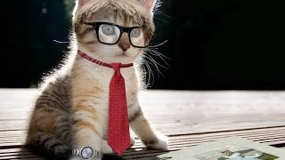 Funny kittens Забавные котята YouTubeFotoVideo