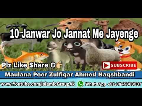 Important Clip 10 Janwar Jo Jannat Me Jayenge ? Maulana Peer Zulfiqar Ahmed Naqshbandi