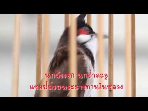เจาะสนามนก - รายการเจาะสนามนก ออนทีวี ตอน ไก่พระองค์ดำ บานาน่า สูตรอาหาร/
