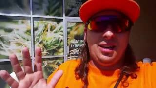 LAS VEGAS OASIS MEDICAL OFFICIAL WALKTHROUGH!! by Custom Grow 420