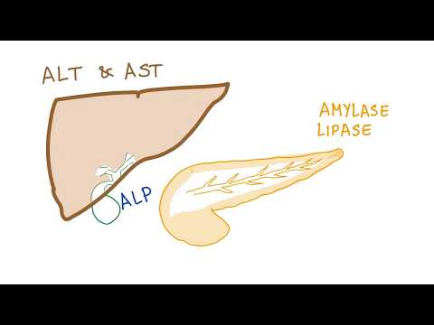 Liver and pancreatic enzymes explained | AST, ALT, GGT, ALP, Amylase& Lipase