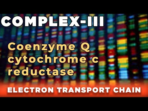 Electron transport chain COMPLEX - 3 (cytochrome c reductase)