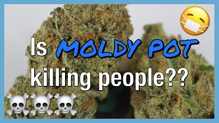 Is MOLDY Cannabis KILLING People?! | NewsNug | CoralReefer by Coral Reefer