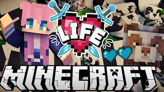 •・゚: Panda Chaos :・゚• | Ep. 6 | Minecraft X Life SMP