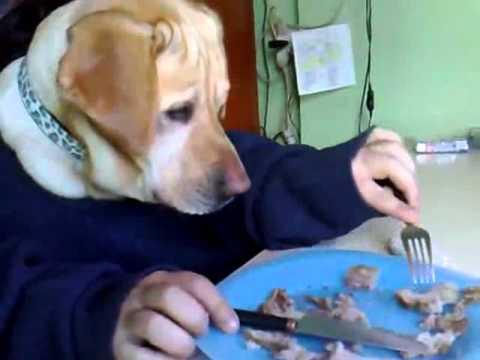 Chú chó ngồi ăn như người :D