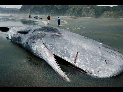 7 ужасных морских монстров