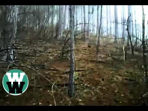7 Best Bigfoot Sightings Captured on Camera