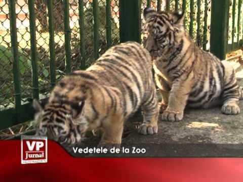 Vedetele de la Zoo