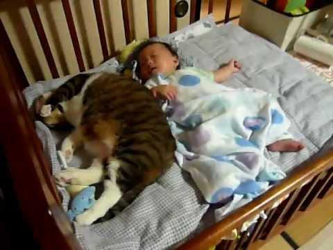 Dormire con il proprio gatto