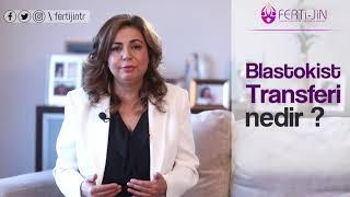 Op. Dr. Seval Taşdemir - Blastokist Transferi Nedir?