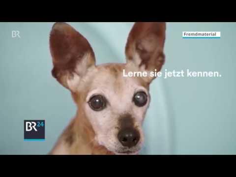 Adoptify: Per Musikgeschmack zum passenden Hund