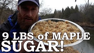 Download Lagu MILKING a TREE!?! | Maple SUGAR on OPEN FIRE | Home Made Evaporator, Wood Boiler, Chickens, Gardens Mp3