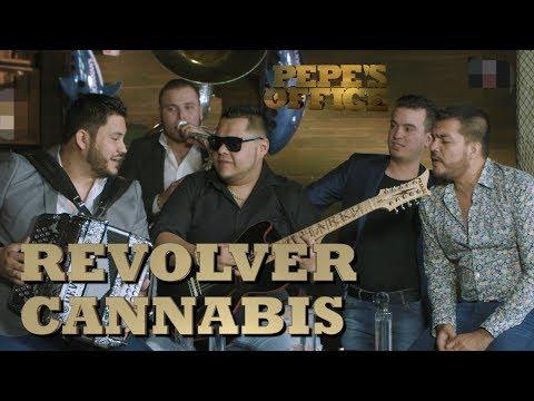 REVOLVER CANNABIS DEMUESTRA POR QUÉ SON LOS MÁS PEDIDOS - Pepe's Office - Thumbnail