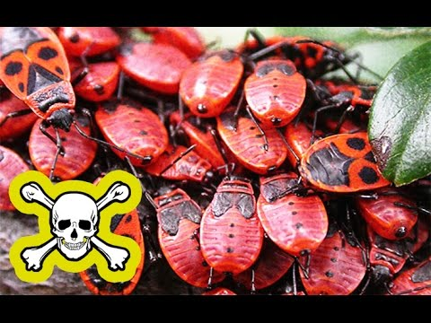 8 опасных насекомых, живущих дома!