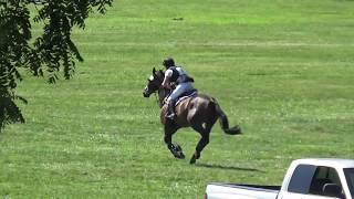 Full competition footage of Riot Gear (16.3 hds 2009 Oldenburg gelding owned by Steve & Vicki Sukup) in Open Preliminary at ...