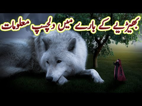 Wolf, The Unsung warrior, Full information   Urdu Documentary   Factical   Science and Technology