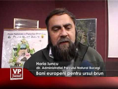 Bani europeni pentru ursul brun