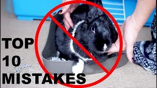 TOP 10 MISTAKES RABBIT OWNERS MAKE by Lennon The Bunny