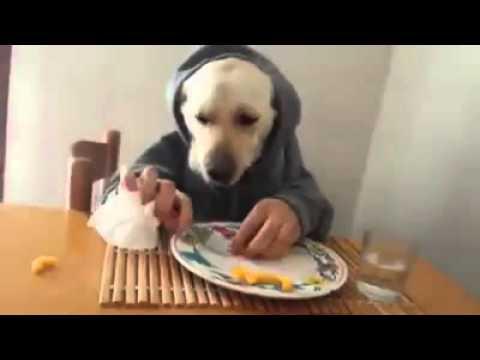 Un chien qui mange comme un humain