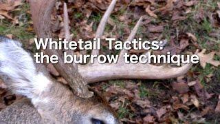 Whitetail Tactics: the Burrow Technique