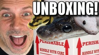 MOST INSANE SNAKE UNBOXING EVER!! Brian Barczyk by Brian Barczyk