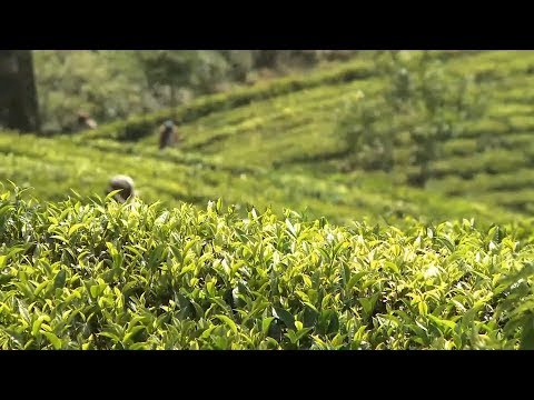 Video of Sri Lanka Travel - Red Dot