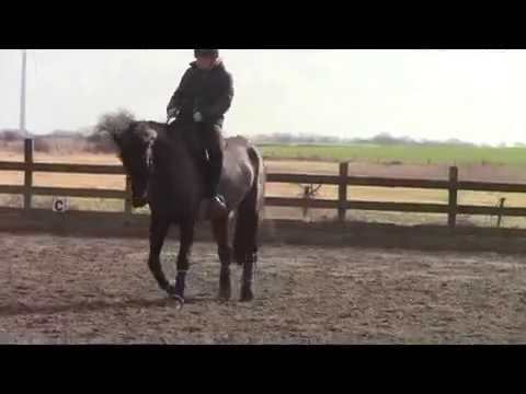 Karat HD – Practicing our lateral work at home – 1 March 2015