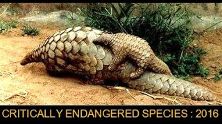 The Most Critically Endangered Animal Species of 2016