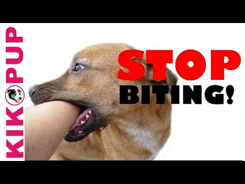 STOP Your Puppy BITING Mouthing