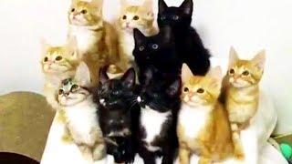 なになに?どこ見てるの?きょろきょろキャッツ/キリン「午後の癒しの動物園」動画7