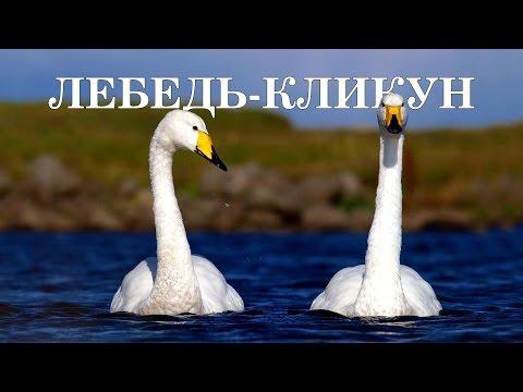 Птицы - обитатели озер, болот и рек. самый популярный справочник