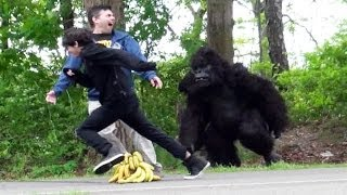 Video Classic Gorilla In Real Life Hidden Camera Prank MP3, 3GP, MP4, WEBM, AVI, FLV Agustus 2018